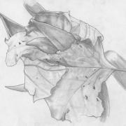 tulip-through-leaf