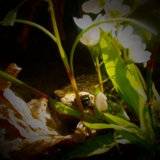 enhanced_frog