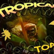 trop-toad